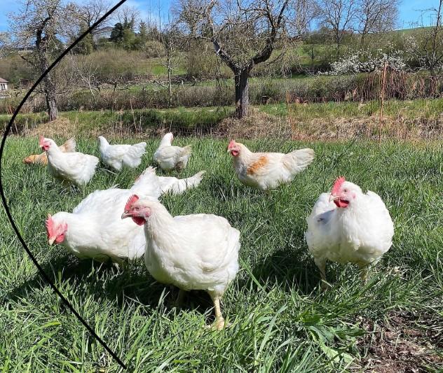 2 Hähnchen (5Kg) <br>aus Freilandhaltung